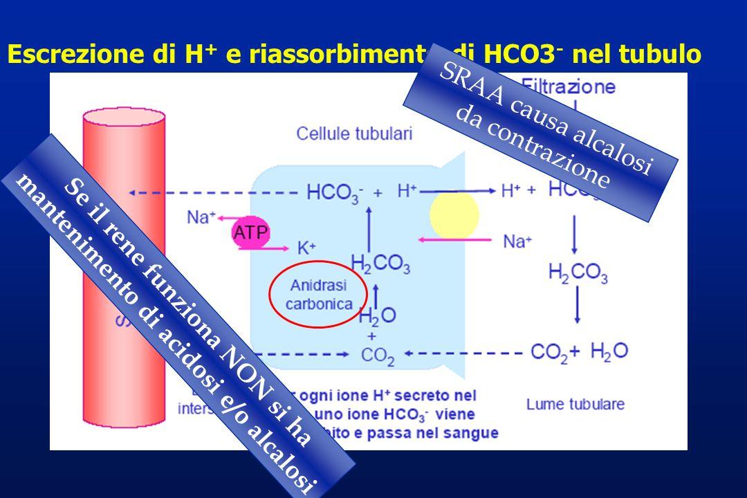 Escrezione di H + e riassorbimento di HCO3 - nel tubulo Se il rene funziona NON si ha mantenimento di acidosi e/o alcalosi SRAA causa alcalosi da cont