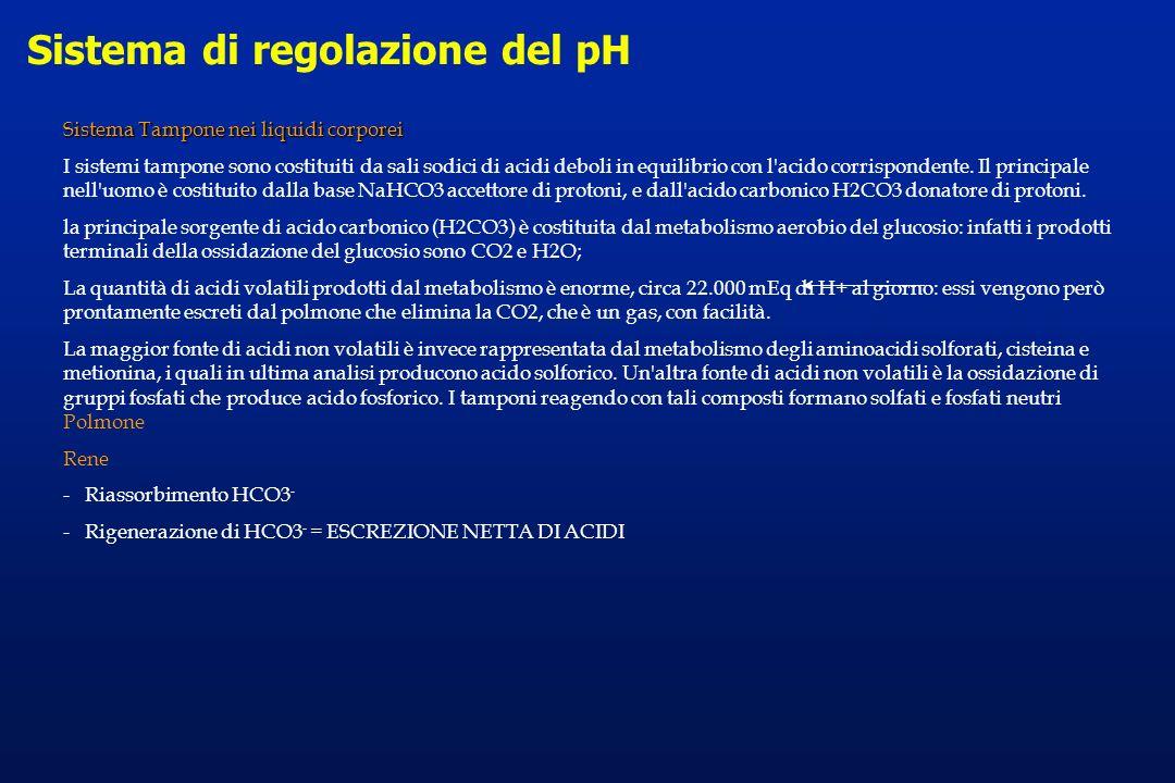Sistema di regolazione del pH Sistema Tampone nei liquidi corporei I sistemi tampone sono costituiti da sali sodici di acidi deboli in equilibrio con