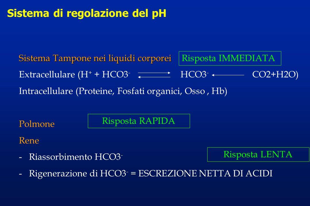 Sistema di regolazione del pH Sistema Tampone nei liquidi corporei Extracellulare (H + + HCO3 - HCO3 - CO2+H2O) Intracellulare (Proteine, Fosfati orga