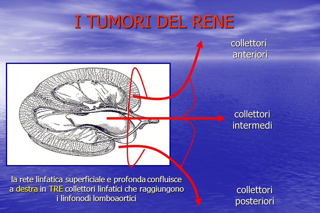 collettorianteriori collettoriintermedi collettoriposteriori la rete linfatica superficiale e profonda confluisce a destra in TRE collettori linfatici