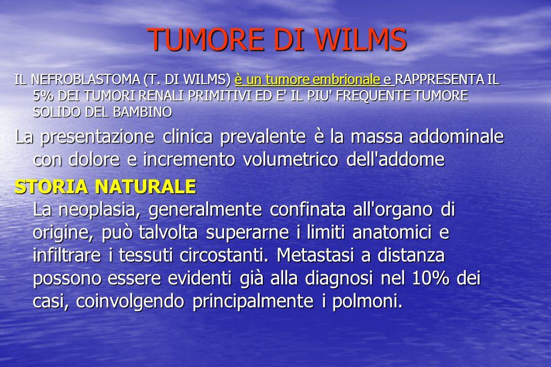 TUMORE DI WILMS IL NEFROBLASTOMA (T. DI WILMS) è un tumore embrionale e RAPPRESENTA IL 5% DEI TUMORI RENALI PRIMITIVI ED E' IL PIU' FREQUENTE TUMORE S