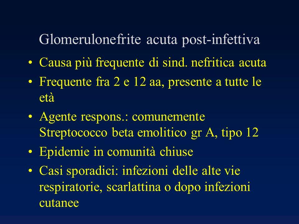 Glomerulonefrite acuta post-infettiva Causa più frequente di sind. nefritica acuta Frequente fra 2 e 12 aa, presente a tutte le età Agente respons.: c
