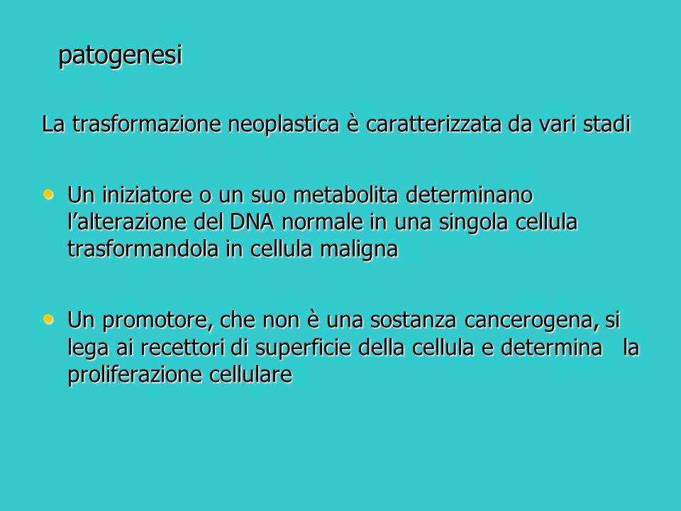 patogenesi La trasformazione neoplastica è caratterizzata da vari stadi Un iniziatore o un suo metabolita determinano lalterazione del DNA normale in