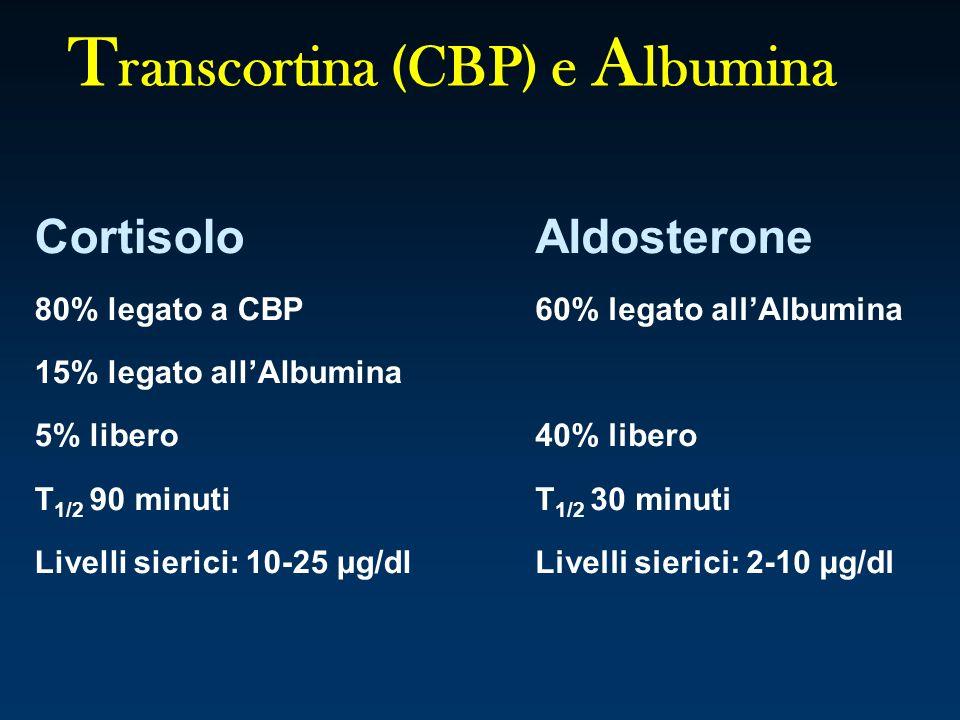 T ranscortina (CBP) e A lbumina Cortisolo 80% legato a CBP 15% legato allAlbumina 5% libero T 1/2 90 minuti Livelli sierici: 10-25 μg/dl Aldosterone 6