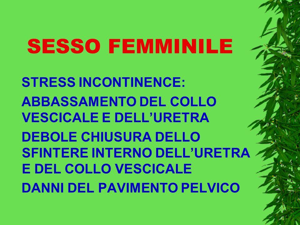 SESSO FEMMINILE STRESS INCONTINENCE: ABBASSAMENTO DEL COLLO VESCICALE E DELLURETRA DEBOLE CHIUSURA DELLO SFINTERE INTERNO DELLURETRA E DEL COLLO VESCICALE DANNI DEL PAVIMENTO PELVICO