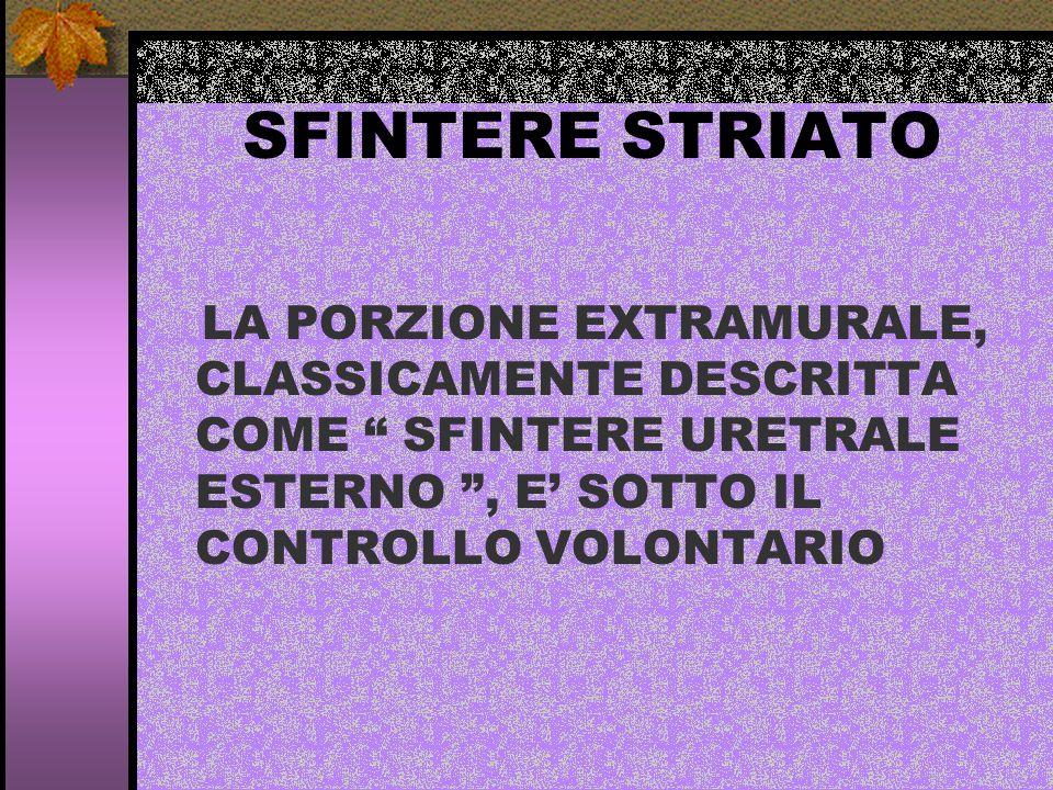 SFINTERE STRIATO LA PORZIONE EXTRAMURALE, CLASSICAMENTE DESCRITTA COME SFINTERE URETRALE ESTERNO, E SOTTO IL CONTROLLO VOLONTARIO