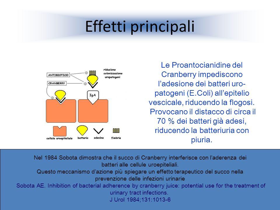 Effetti principali Le Proantocianidine del Cranberry impediscono ladesione dei batteri uro- patogeni (E.Coli) allepitelio vescicale, riducendo la flog
