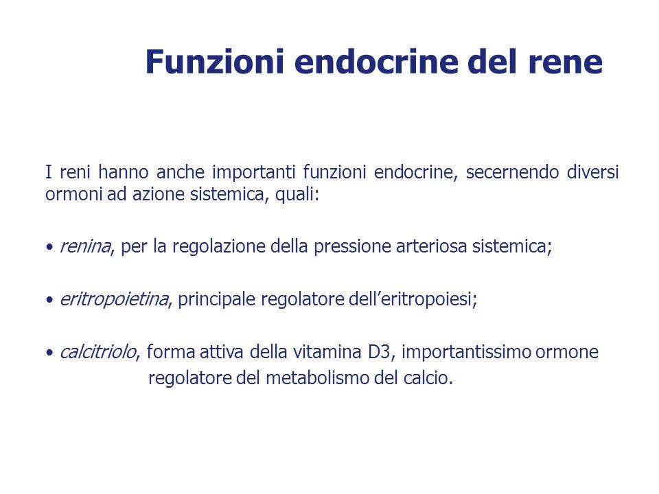 Funzioni endocrine del rene I reni hanno anche importanti funzioni endocrine, secernendo diversi ormoni ad azione sistemica, quali: renina, per la reg