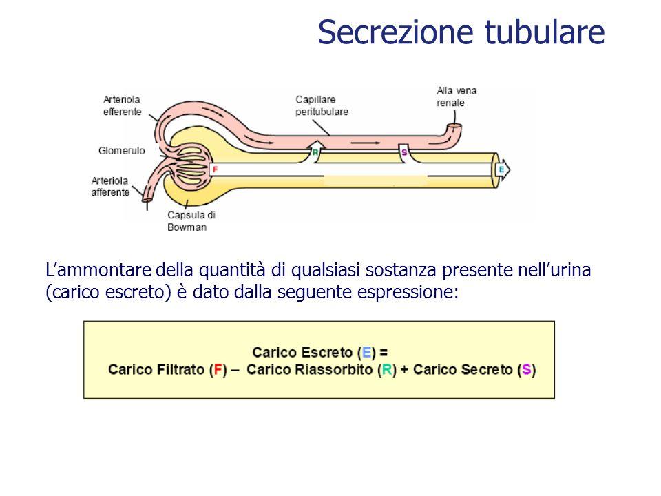 Lammontare della quantità di qualsiasi sostanza presente nellurina (carico escreto) è dato dalla seguente espressione: Secrezione tubulare