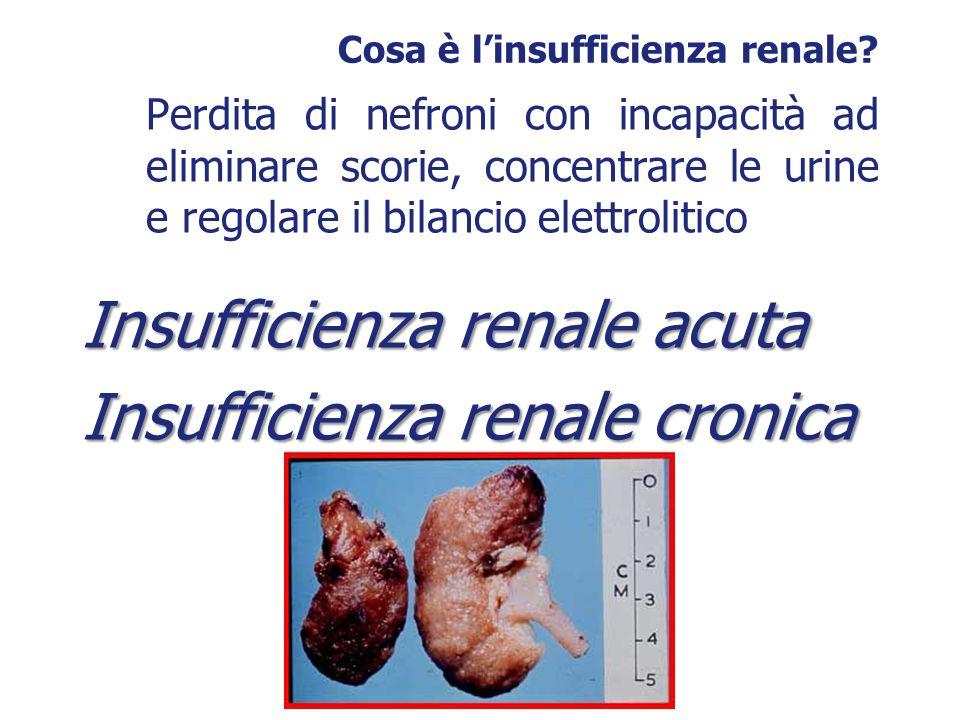 Cosa è linsufficienza renale? Perdita di nefroni con incapacità ad eliminare scorie, concentrare le urine e regolare il bilancio elettrolitico Insuffi