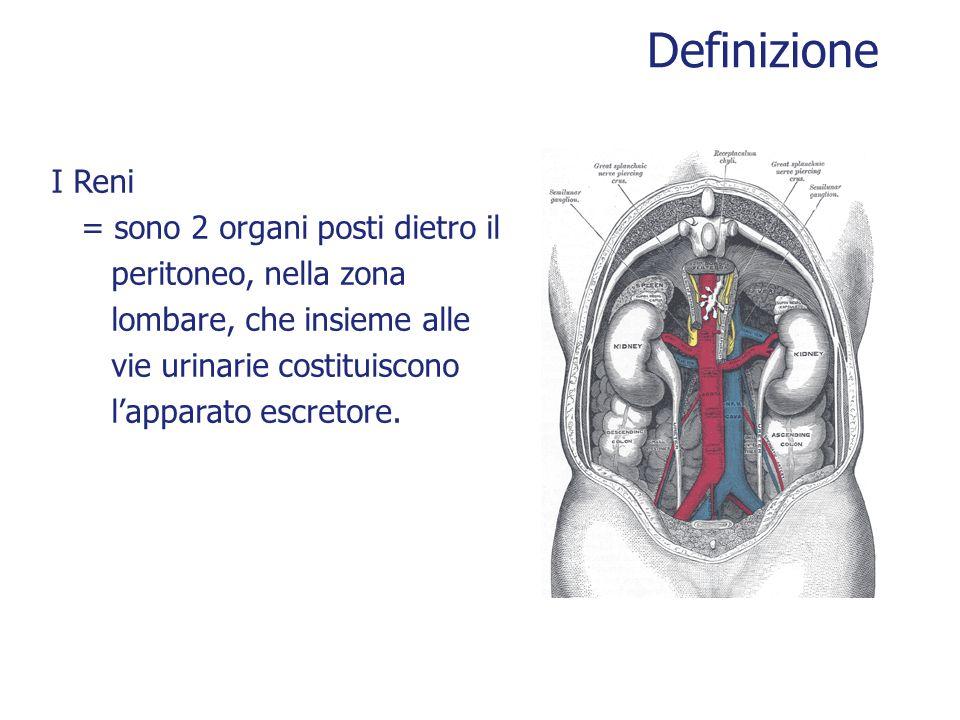 Definizione I Reni = sono 2 organi posti dietro il peritoneo, nella zona lombare, che insieme alle vie urinarie costituiscono lapparato escretore.