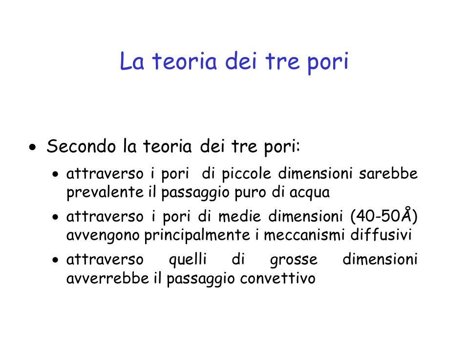 La teoria dei tre pori Secondo la teoria dei tre pori: attraverso i pori di piccole dimensioni sarebbe prevalente il passaggio puro di acqua attravers