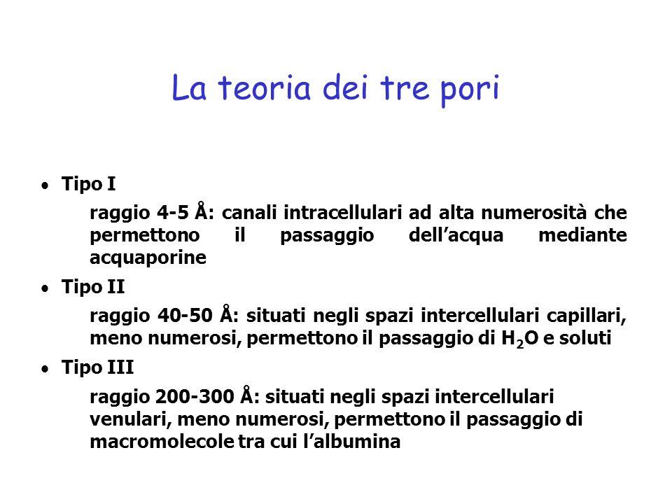 Tipo I raggio 4-5 Å: canali intracellulari ad alta numerosità che permettono il passaggio dellacqua mediante acquaporine Tipo II raggio 40-50 Å: situa