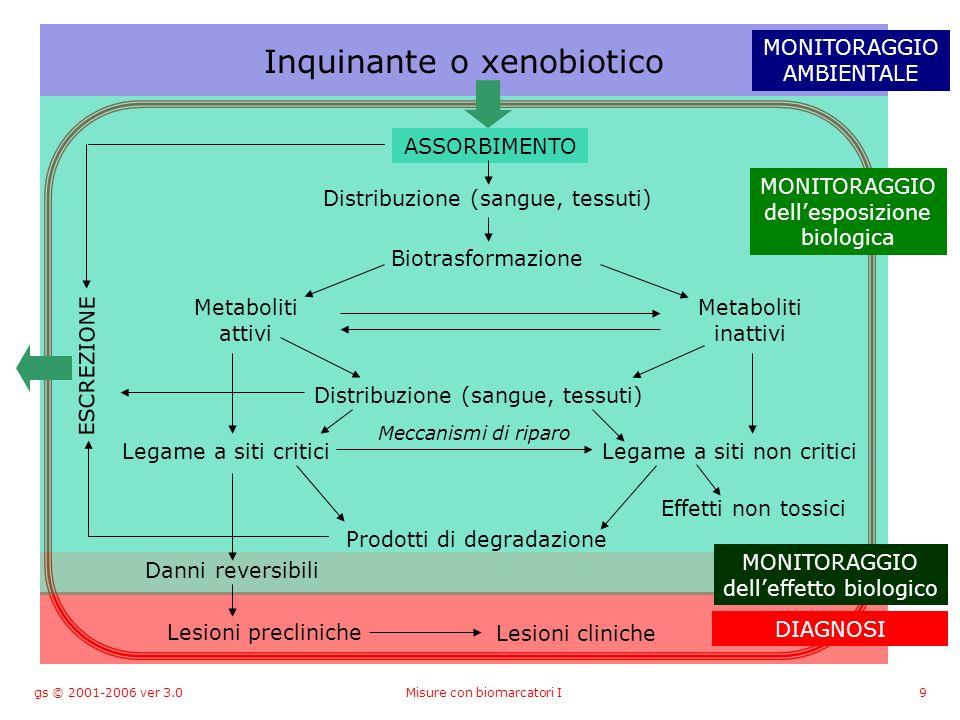 gs © 2001-2006 ver 3.0Misure con biomarcatori I9 Inquinante o xenobiotico ASSORBIMENTO Distribuzione (sangue, tessuti) Biotrasformazione Metaboliti attivi Metaboliti inattivi Distribuzione (sangue, tessuti) ESCREZIONE Legame a siti criticiLegame a siti non critici Prodotti di degradazione Effetti non tossici Danni reversibili Lesioni precliniche Lesioni cliniche MONITORAGGIO AMBIENTALE MONITORAGGIO dellesposizione biologica MONITORAGGIO delleffetto biologico Meccanismi di riparo DIAGNOSI