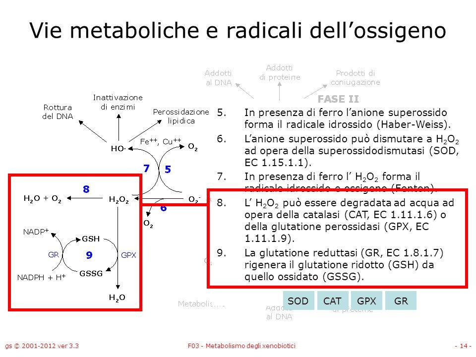 gs © 2001-2012 ver 3.3F03 - Metabolismo degli xenobiotici- 14 - Vie metaboliche e radicali dellossigeno 5.In presenza di ferro lanione superossido for