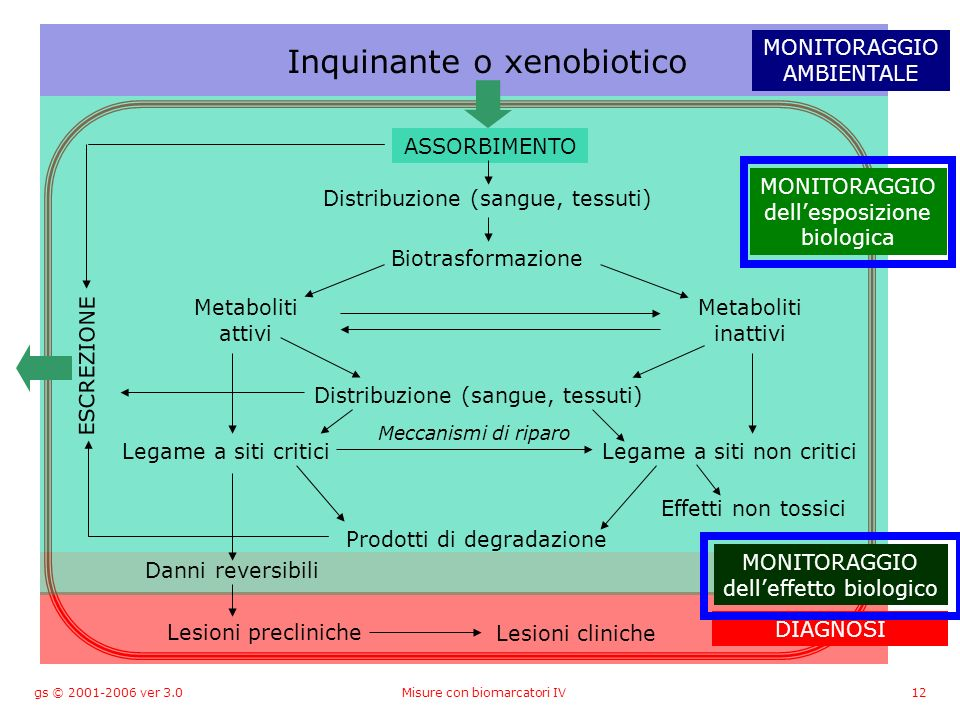gs © 2001-2006 ver 3.0Misure con biomarcatori IV12 Inquinante o xenobiotico ASSORBIMENTO Distribuzione (sangue, tessuti) Biotrasformazione Metaboliti attivi Metaboliti inattivi Distribuzione (sangue, tessuti) ESCREZIONE Legame a siti criticiLegame a siti non critici Prodotti di degradazione Effetti non tossici Danni reversibili Lesioni precliniche Lesioni cliniche MONITORAGGIO AMBIENTALE MONITORAGGIO dellesposizione biologica MONITORAGGIO delleffetto biologico Meccanismi di riparo DIAGNOSI