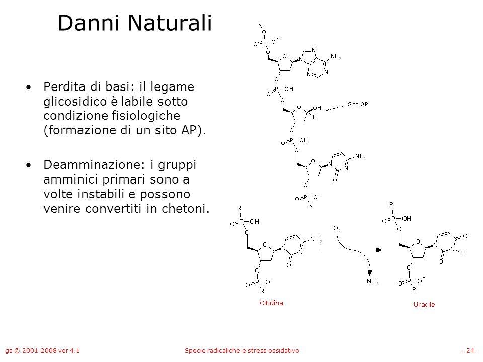 gs © 2001-2008 ver 4.1Specie radicaliche e stress ossidativo- 24 - Danni Naturali Perdita di basi: il legame glicosidico è labile sotto condizione fis
