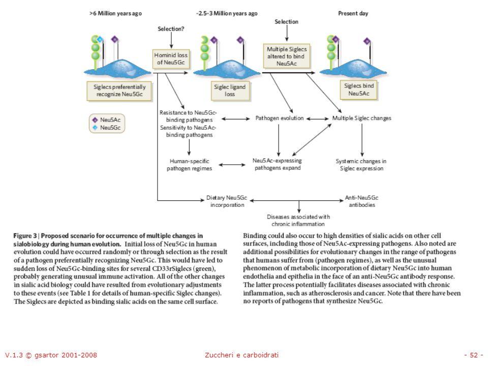 V.1.3 © gsartor 2001-2008Zuccheri e carboidrati- 53 - Apolipoproteina-H umana (1C1Z) Asn NAG Man
