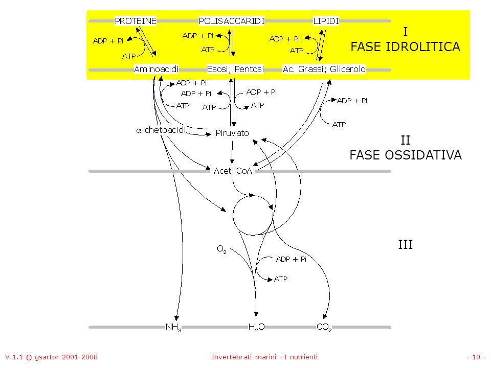V.1.1 © gsartor 2001-2008Invertebrati marini - I nutrienti- 10 - II FASE OSSIDATIVA I FASE IDROLITICA III