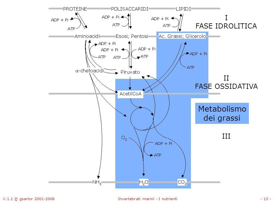 V.1.1 © gsartor 2001-2008Invertebrati marini - I nutrienti- 13 - II FASE OSSIDATIVA I FASE IDROLITICA III Metabolismo dei grassi