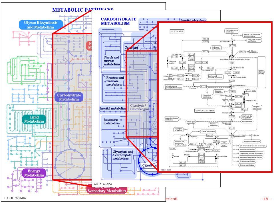 V.1.1 © gsartor 2001-2008Invertebrati marini - I nutrienti- 18 -