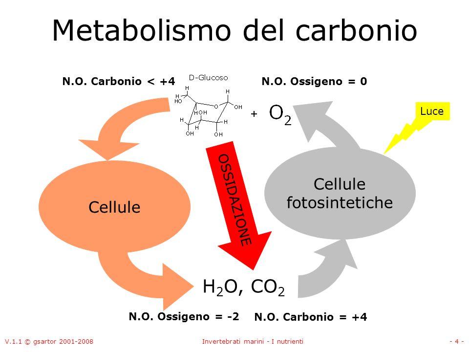 V.1.1 © gsartor 2001-2008Invertebrati marini - I nutrienti- 4 - Metabolismo del carbonio Cellule fotosintetiche Cellule H 2 O, CO 2 N.O.