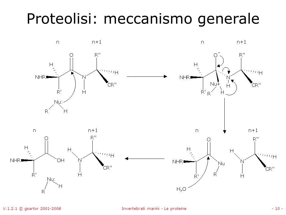 V.1.2.1 © gsartor 2001-2008Invertebrati marini - Le proteine- 10 - Proteolisi: meccanismo generale