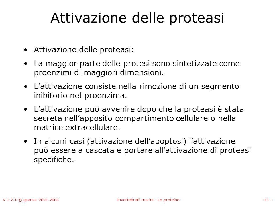 V.1.2.1 © gsartor 2001-2008Invertebrati marini - Le proteine- 11 - Attivazione delle proteasi Attivazione delle proteasi: La maggior parte delle prote