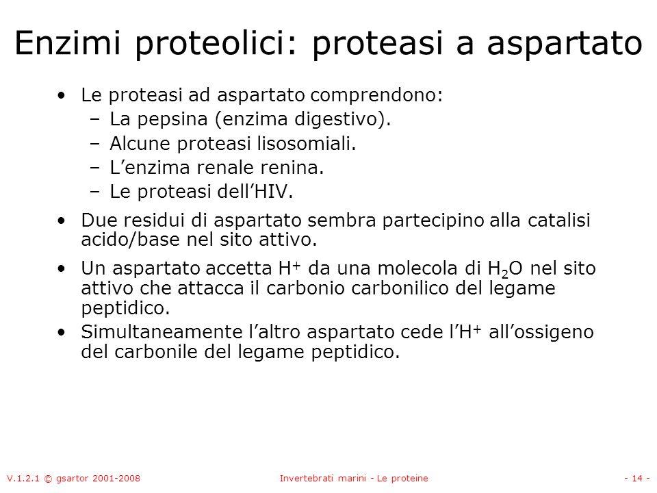 V.1.2.1 © gsartor 2001-2008Invertebrati marini - Le proteine- 14 - Enzimi proteolici: proteasi a aspartato Le proteasi ad aspartato comprendono: –La p