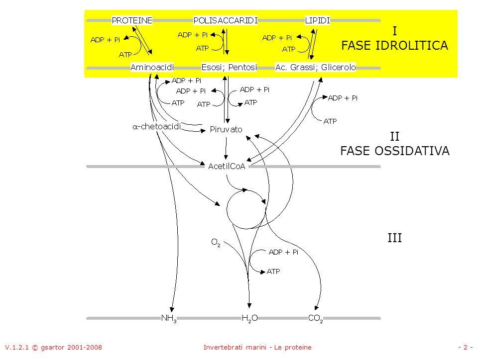 V.1.2.1 © gsartor 2001-2008Invertebrati marini - Le proteine- 63 - Meccanismo della transaminazione