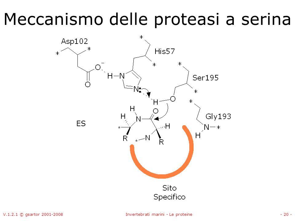 V.1.2.1 © gsartor 2001-2008Invertebrati marini - Le proteine- 20 - Meccanismo delle proteasi a serina ES