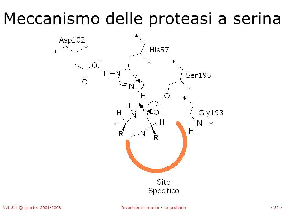 V.1.2.1 © gsartor 2001-2008Invertebrati marini - Le proteine- 22 - Meccanismo delle proteasi a serina