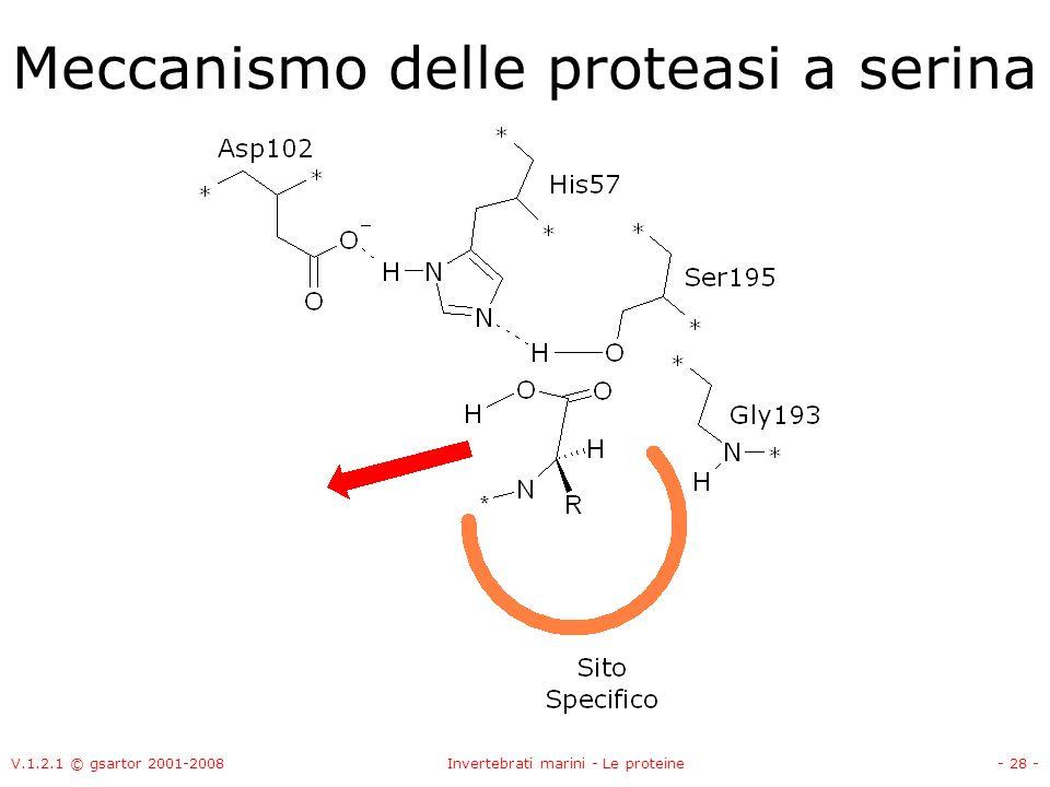 V.1.2.1 © gsartor 2001-2008Invertebrati marini - Le proteine- 28 - Meccanismo delle proteasi a serina