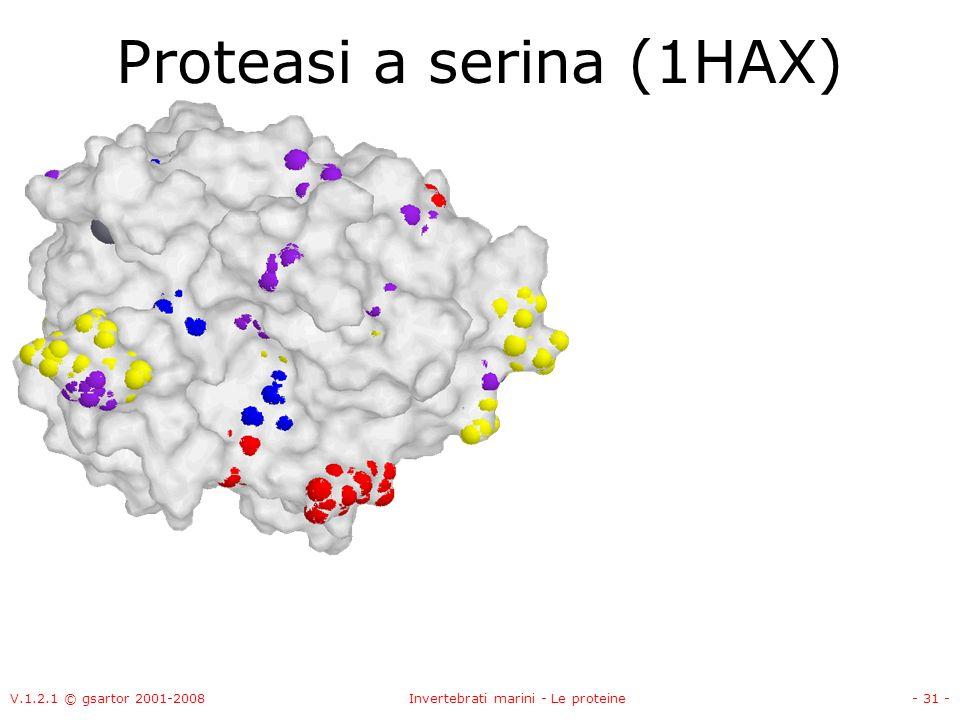 V.1.2.1 © gsartor 2001-2008Invertebrati marini - Le proteine- 31 - Proteasi a serina (1HAX)