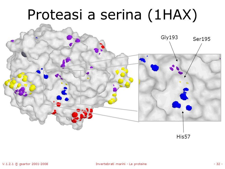 V.1.2.1 © gsartor 2001-2008Invertebrati marini - Le proteine- 32 - Proteasi a serina (1HAX) Ser195 Gly193 His57