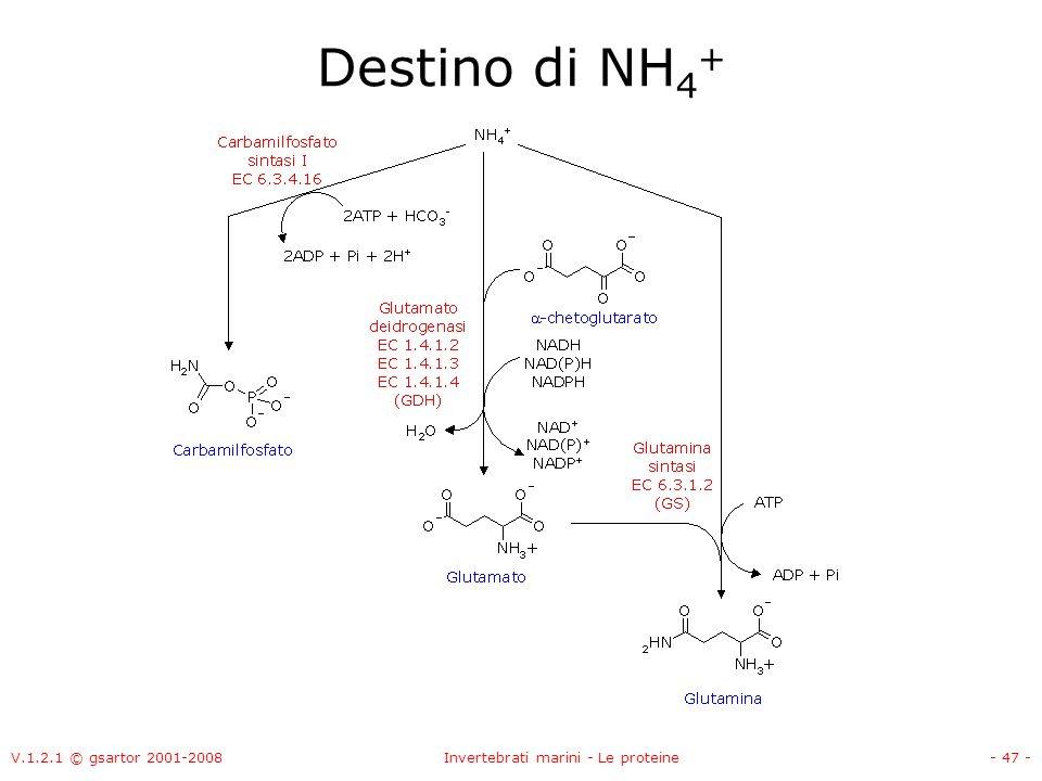 V.1.2.1 © gsartor 2001-2008Invertebrati marini - Le proteine- 47 - Destino di NH 4 +