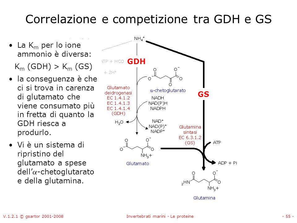 V.1.2.1 © gsartor 2001-2008Invertebrati marini - Le proteine- 55 - Correlazione e competizione tra GDH e GS La K m per lo ione ammonio è diversa: K m