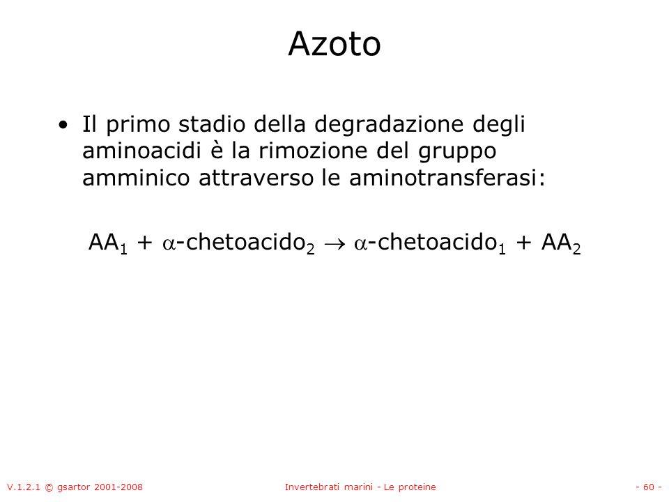 V.1.2.1 © gsartor 2001-2008Invertebrati marini - Le proteine- 60 - Azoto Il primo stadio della degradazione degli aminoacidi è la rimozione del gruppo