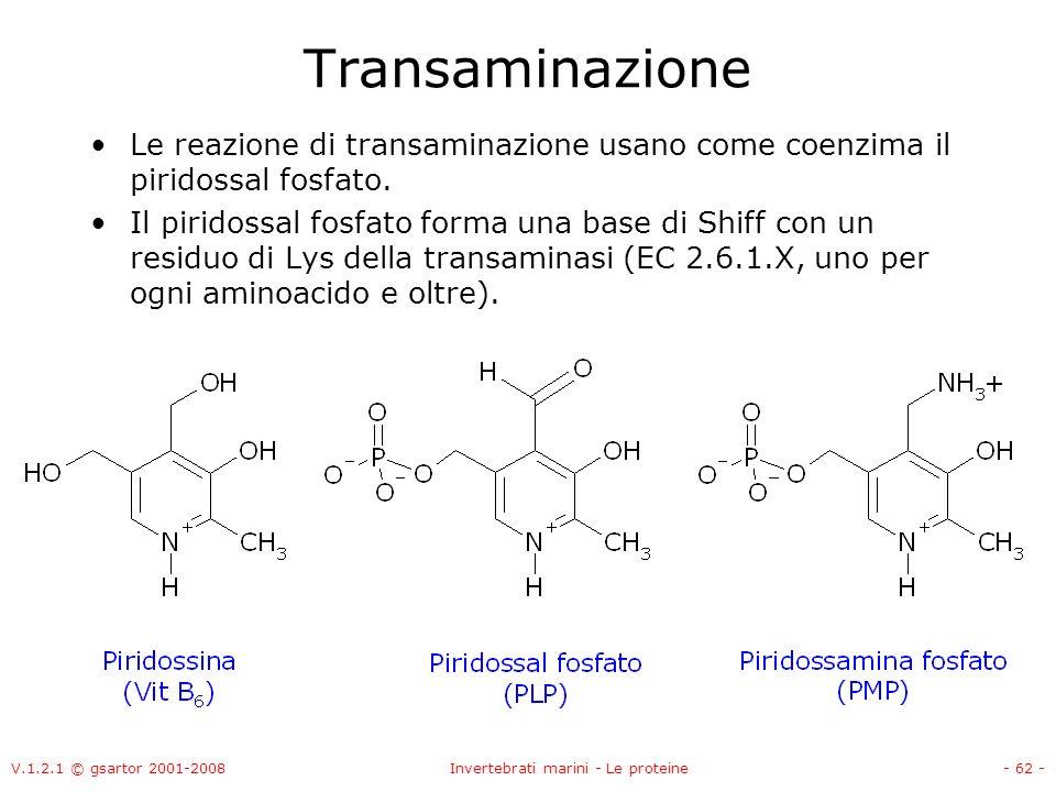 V.1.2.1 © gsartor 2001-2008Invertebrati marini - Le proteine- 62 - Transaminazione Le reazione di transaminazione usano come coenzima il piridossal fo