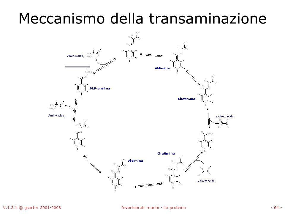 V.1.2.1 © gsartor 2001-2008Invertebrati marini - Le proteine- 64 - Meccanismo della transaminazione
