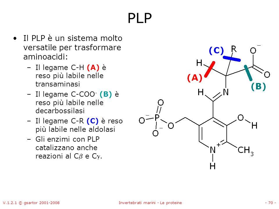 V.1.2.1 © gsartor 2001-2008Invertebrati marini - Le proteine- 70 - PLP Il PLP è un sistema molto versatile per trasformare aminoacidi: –Il legame C-H
