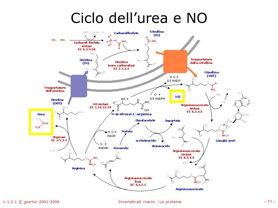 V.1.2.1 © gsartor 2001-2008Invertebrati marini - Le proteine- 77 - Ciclo dellurea e NO