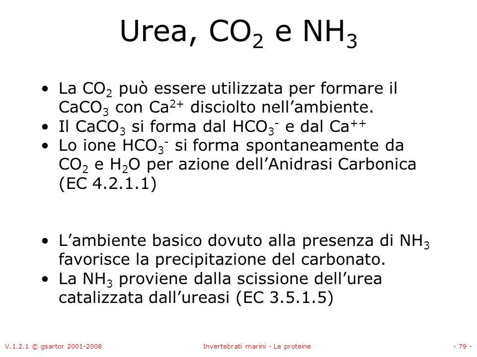 V.1.2.1 © gsartor 2001-2008Invertebrati marini - Le proteine- 79 - Urea, CO 2 e NH 3 La CO 2 può essere utilizzata per formare il CaCO 3 con Ca 2+ dis