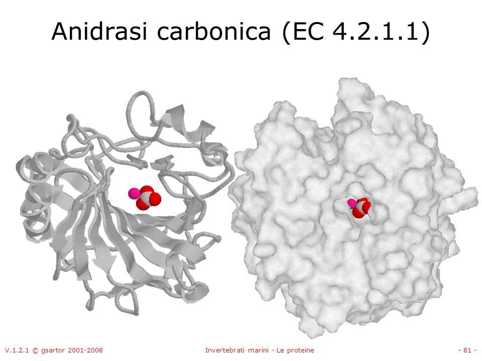 V.1.2.1 © gsartor 2001-2008Invertebrati marini - Le proteine- 81 - Anidrasi carbonica (EC 4.2.1.1)