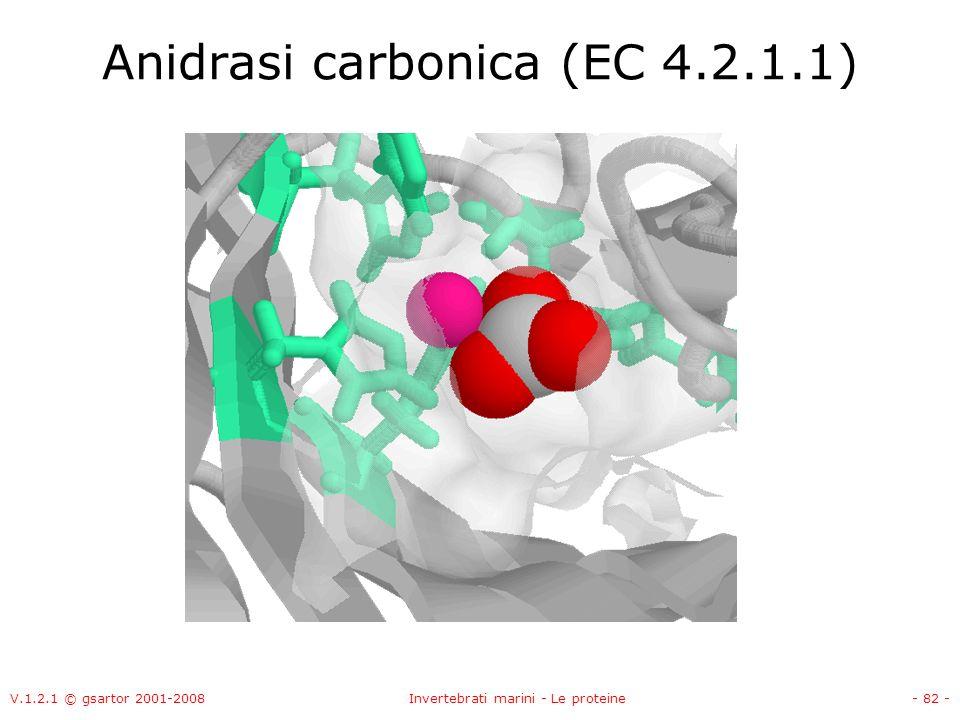V.1.2.1 © gsartor 2001-2008Invertebrati marini - Le proteine- 82 - Anidrasi carbonica (EC 4.2.1.1)