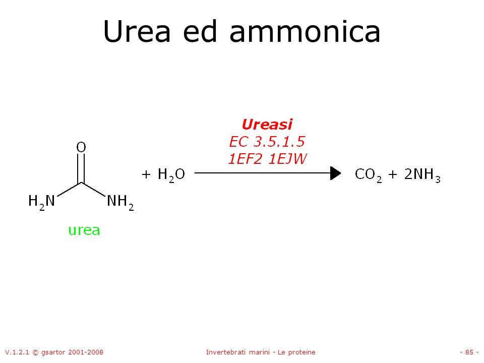 V.1.2.1 © gsartor 2001-2008Invertebrati marini - Le proteine- 85 - Urea ed ammonica
