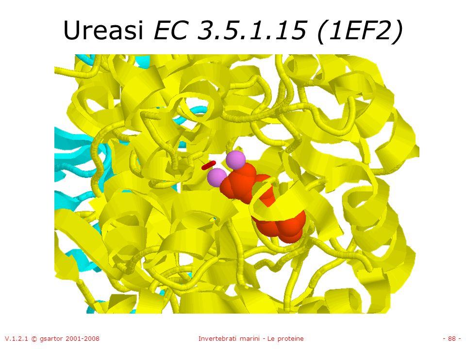 V.1.2.1 © gsartor 2001-2008Invertebrati marini - Le proteine- 88 - Ureasi EC 3.5.1.15 (1EF2)