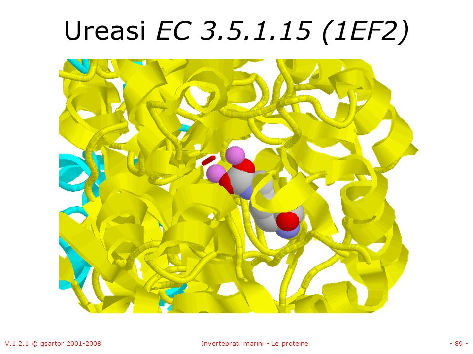 V.1.2.1 © gsartor 2001-2008Invertebrati marini - Le proteine- 89 - Ureasi EC 3.5.1.15 (1EF2)