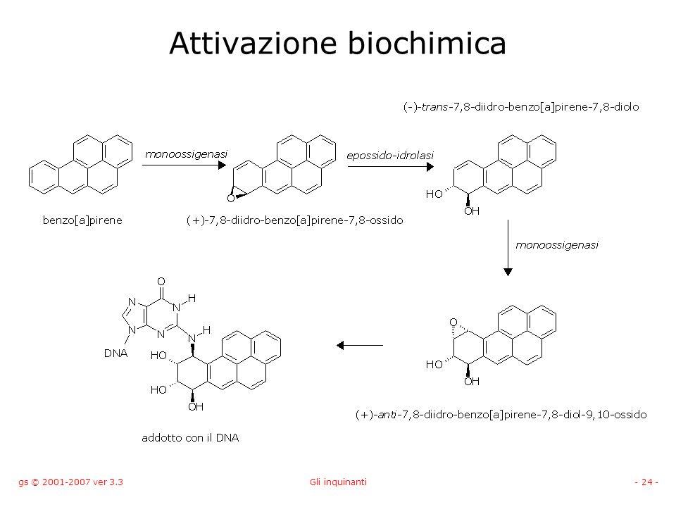 gs © 2001-2007 ver 3.3Gli inquinanti- 24 - Attivazione biochimica
