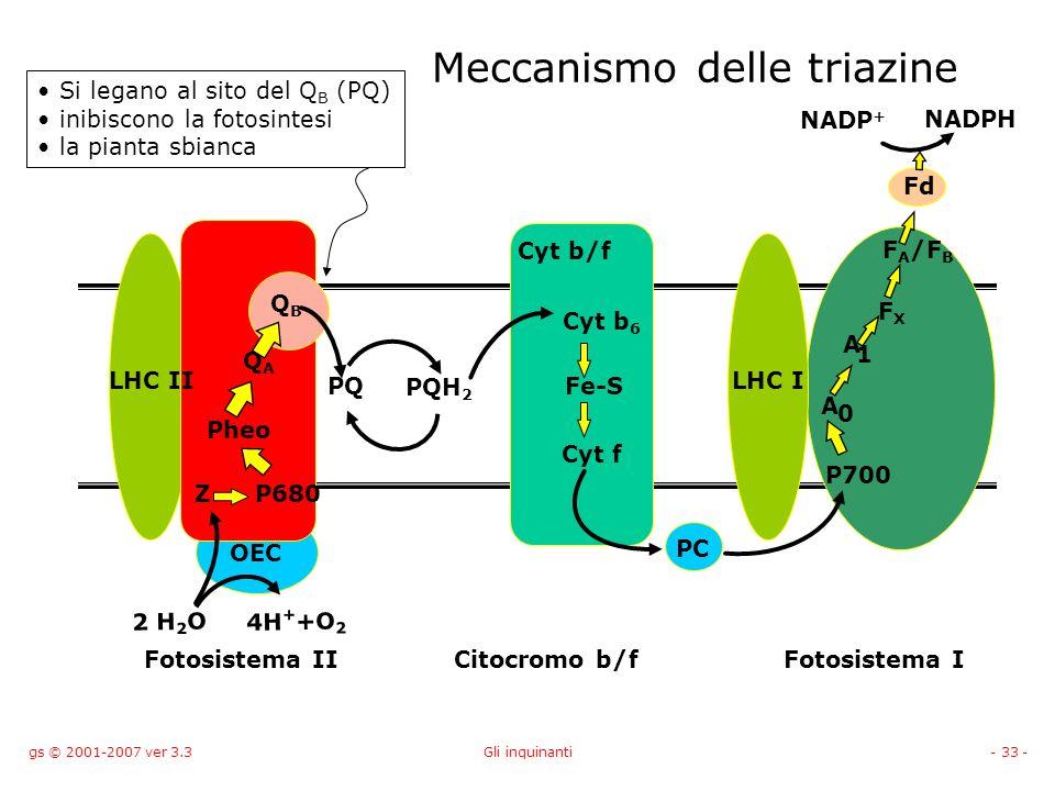 gs © 2001-2007 ver 3.3Gli inquinanti- 33 - Meccanismo delle triazine PC LHC II Cyt b/f OEC 2 H 2 O 4H + +O 2 Z Pheo QAQA PQ PQH 2 Cyt b 6 Fe-S Cyt f A